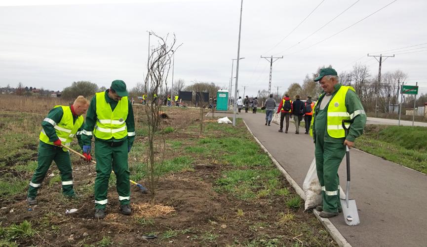 Akcja sadzenia drzew w Brwinowie