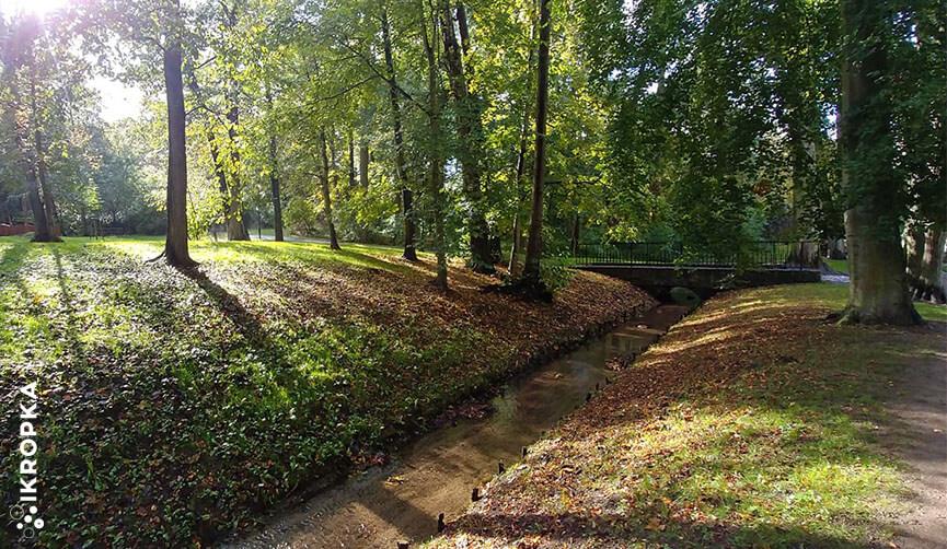 Przegląd drzew w Parku Miejskim w Wejherowie