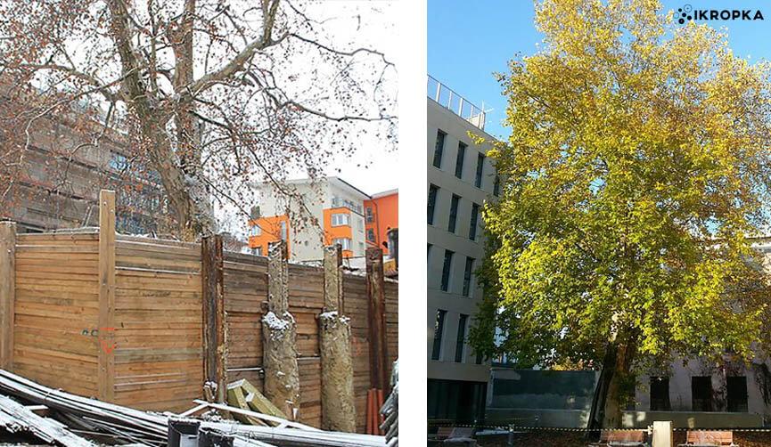 """""""Infrastruktura w zgodzie z drzewami"""""""